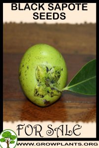 Black sapote seeds for sale