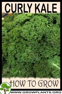 How to grow Curly Kale